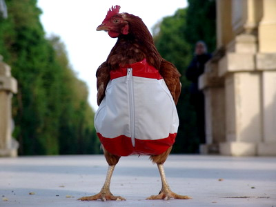 افزایش ۸۰ درصدی قیمت مرغ طی ۶ ماه